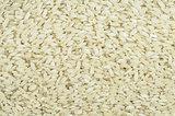 Rrice grain