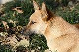 Dog portrait closeup