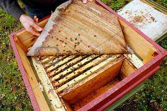 A Beekeeper opens a hive.