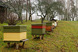 Row of Honey Bee Hives