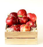 fresh ripe organic red apples in a wooden box