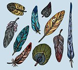 Isolated feathers.