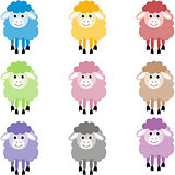 Cute sheep in different colors