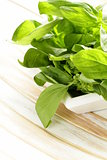 organic fresh green basil on a wooden table