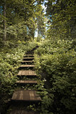 Staircase in the forest.