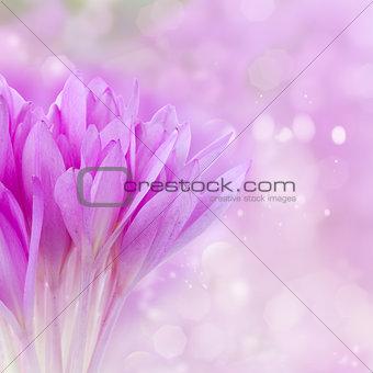 posy of crocus flowers