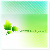 Leaf on Vector Background