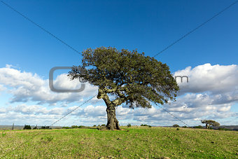 Beautiful Landscape with a Lonely Tree