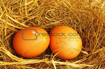 Two golden eggs
