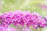 bright purple flowers, autumn flower design.With copy-space