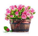 Bunch pink roses in pot