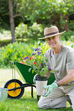 Smiling mature man engaged in gardening