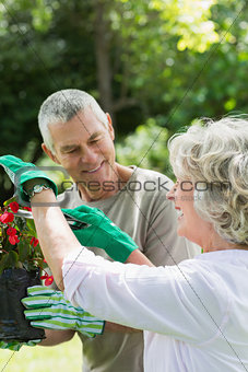 Mature couple engaged in gardening