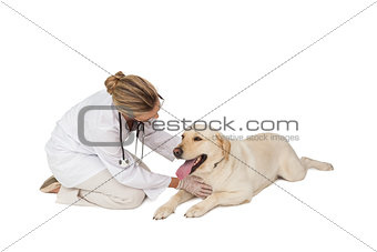 Pretty vet stroking yellow labrador dog