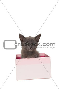 Cute grey kitten sitting in a pink gift box