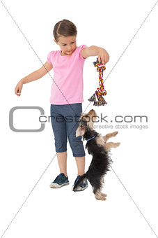 Cute yorkshire terrier puppy playing with little girl holding chew toy