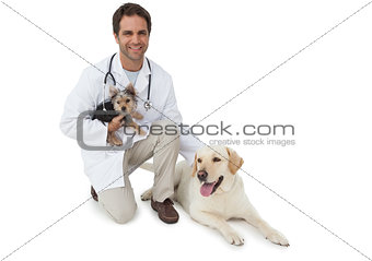 Handsome vet posing with yorkshire terrier and yellow labrador