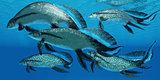 Devonian Scaumenacia Fish
