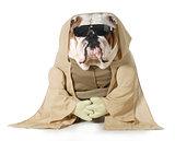 dog monk