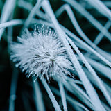 Close-up of frost on plant and grass