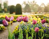 Vintage park with tulip garden