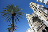 Palm tree and cathedral in Tunis