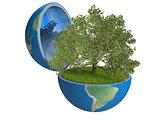 Oak tree inside planet