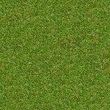 Green Meadow Grass. Seamless Texture.