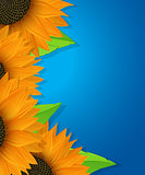 Sunflowers and leaves card