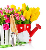 Roses and tulips with garden tools