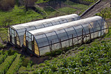 Greenhouse for the cultivation of salad