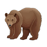 Brown bear.