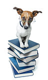 dog book stack