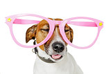 funny glasses dog