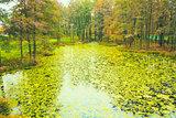 Wild Bog Swamp