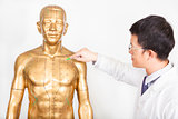 chinese medicine doctor teaches acupoint on human model