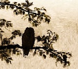 Roosting owl silhouette