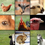 collection of images with farm animals