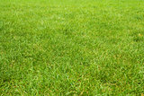 green grass texture from golf course