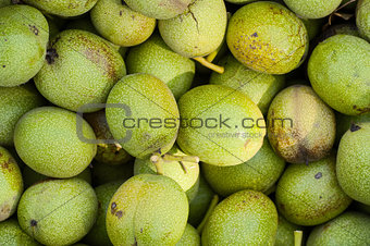 background the green walnuts