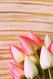 white and pink tulips flowers on a wooden background