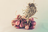 Shallots in white background