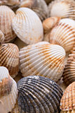 Heap textured sea shells