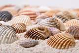 Sea shells with coral sand