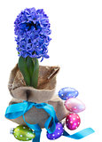 blue hyacinth flowers with easter eggs