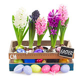 colorful hyacinth flowers with eggs