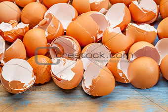 broken chicken eggshells