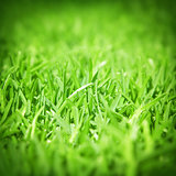 Spring green grass background