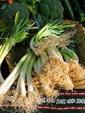 Organic scallion