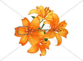 Beautiful orange lily flowers isolated on white